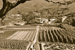 3-Chinese-Intensive-Horticulture_Intensive-Mini-Farm-in-China_date-and-photographer-unknown_Alans-Garden-Influences