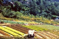 5-Chinese-Intensive-Horticulture_Raised-Planting-Beds-on-a-Terraced-Hillside_date-and-photographer-unknown_Alans-Garden-Influences
