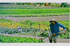 9a-Chinese-Intensive-Horticulture_Intensive-Hillside-Beds_Production-in-Raised-Beds_China_date-and-photographer-unknown_Alans-Garden-Influences