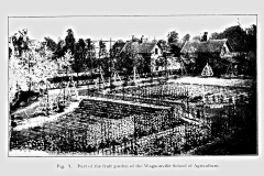 1-French-Intensive-Gardening-Historical-Photographs_Lorette-System-of-Pruning-Photos_Alans-Garden-Influences