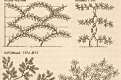 7-French-Intensive-Gardening_Different-Pruning-Shaping-Models_Alans-Garden-Influences