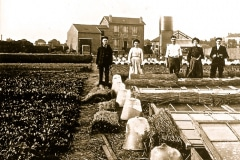 19-X_X_X_French-Intensive-Gardening-History_French-Gardening-Cold-Frame-Hot-Bed-and-Cloche-Work_7_France_date-and-photographer-unknown_Alans-Garden-Influences