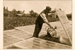 20-X_X_X_French-Intensive-Gardening-History_French-Gardening-Cold-Frame-Hot-Bed-and-Cloche-Work_8_France_date-and-photographer-unknown_Alans-Garden-Influences