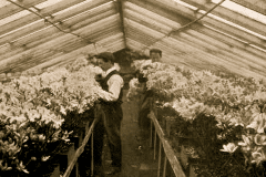 34-X_X_X_French-Intensive-Gardening-History_French-Gardening_Floral-Growing-Work-Under-Glass-in-A-Frame-Greenhouse__France_date-and-photographer-unknown_Alans-Garden-Influences