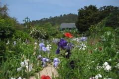 5c-Giverny-Garden-France_of-Claude-Monet_Alans-Garden-Influences