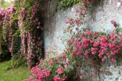23-Ninfa-Gardens-Italy_Alans-Garden-Influences