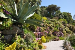 10-Alans-Garden-Influences_Tresco-Abbey-Gardens_Scilly-Isles-England