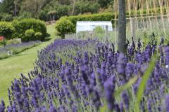 11-Alans-Garden-Influences_Tresco-Abbey-Gardens_Scilly-Isles-England
