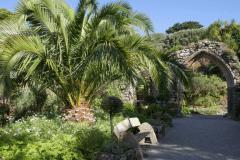 5-Alans-Garden-Influences_Tresco-Abbey-Gardens_Scilly-Isles-England