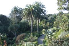 8-Alans-Garden-Influences_Tresco-Abbey-Gardens_Scilly-Isles-England