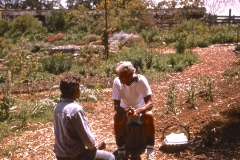 Saratoga_08_Alan-Chadwick-Saratoga-Garden_courtesy-The-Chadwick-Society