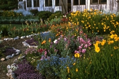 Saratoga_18_The-Saratoga-Garden-Flowers_courtesy-The-Chadwick-Society
