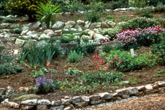 Saratoga_19_The-Saratoga-Garden-Flowers_2_courtesy-The-Chadwick-Society