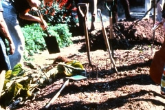Saratoga_36_The-Saratoga-Garden-working-garden-beds_courtesy-The-Chadwick-Society