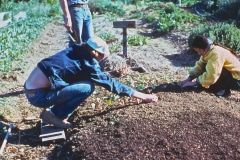 Saratoga_38_Saratoga-CA-Community-Garden-working-garden-beds_The-Saratoga-Garden_courtesy-The-Chadwick-Society