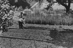 UCSC-00-009_1970_1_X_-Apprentices-digging-beds-UCSC-Chadwick-Garden_photo-courtesy-The-Chadwick-Society_photographer-unknown