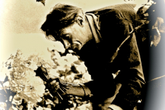 UCSC-00-014_1970_X_X_Alan-Chadwick-working-with-cut-flowers_-Santa-Cruz-Garden_photographer-and-source-unknown_photo-used-in-Cry-California-article-1971