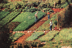 UCSC-00-018_1970_X_X_UCSC-Santa-Cruz-hillside-Garden_photo-courtesy-Paul-Lee_photographer-unknown_2