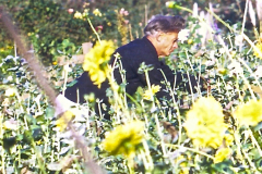 UCSC-02-011_1967-1972_11_Alan-Chadwick-tending-flowers_2
