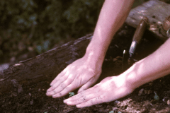12a-1970-71_X_X_The-UC-Santa-Cruz-Chadwick-Garden-Collection_Apprentice-Transplanting-Starts