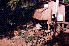 13a-1970-71_X_X_The-UC-Santa-Cruz-Chadwick-Garden-Collection_Chicken-Coop