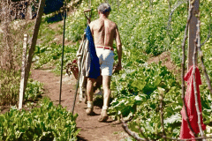 08-1971_X_X_The-UCSC-Photo-Collection_Alan-Chadwick-digging-in-the-Garden__Close-up-photo