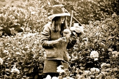 13-1971_X_X_Photos-from-the-Cry-California-Journal-article_apprentice-selecting-cut-flowers
