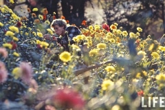 UCSC Chadwick Garden Photo by Greg Villet for Life Magazine, 1970