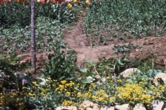 21-X_X_X_UCSC-Chadwick-Garden-Project_Garden-beds_photographer-unknown_courtesy-The-Chadwick-Society