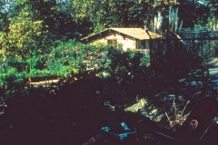27-X_X_X_UCSC-Chadwick-Garden-Project_The-Chalet-Roses_photographer-unknown_courtesy-The-Chadwick-Society_27
