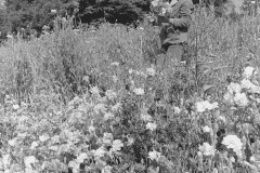 Beth Benjamin, Chadwick Apprentice - UCSC Chadwick Garden, 1968