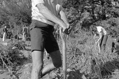 Alan Chadwick Working in the Garden, 1972